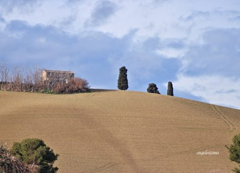 collina1